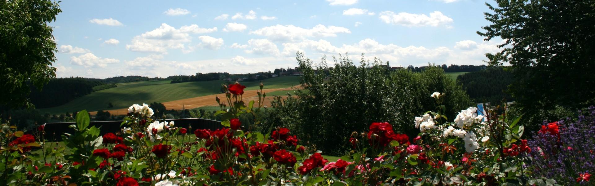 Putting-Grün mit Rosen